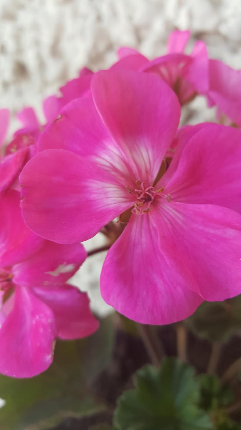 FlowerS6E