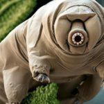 tardigrade2_xaftyx-750x400-150x150.jpg
