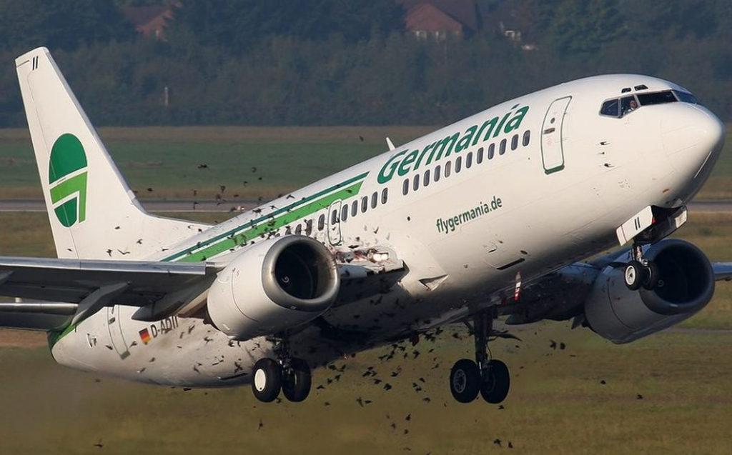 Bient t des drones pour faire fuir les oiseaux au dessus des a roports kulturegeek - Comment faire fuir les oiseaux ...