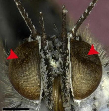 Insectes Mutants Fukushima
