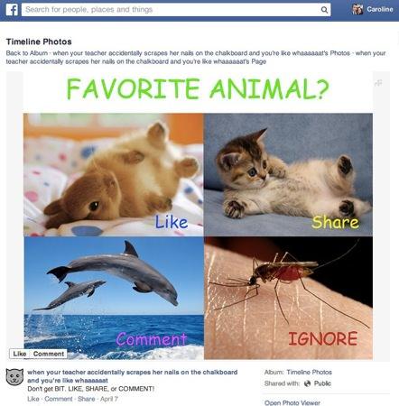 Facebook Spam J'Aime Partage Commente