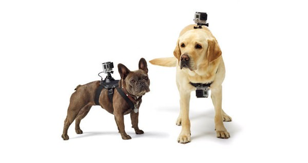 GoPro Fetch Chien
