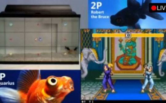 th_Fish_playing_streetfighter-578-80
