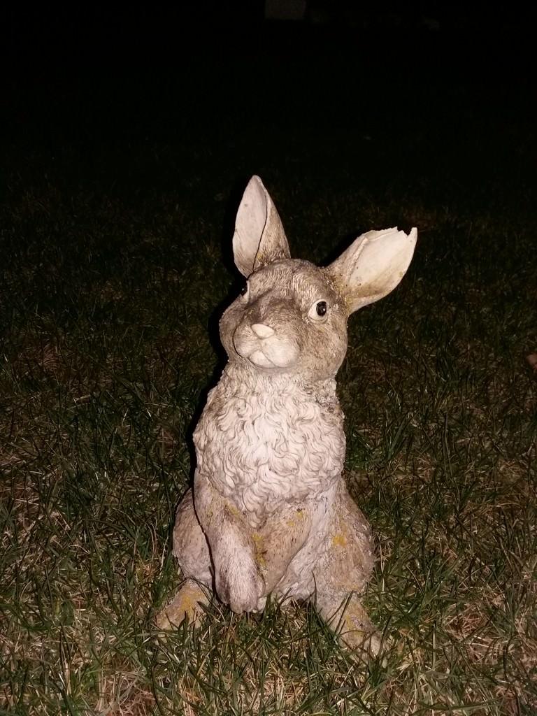 Bunny-Night2
