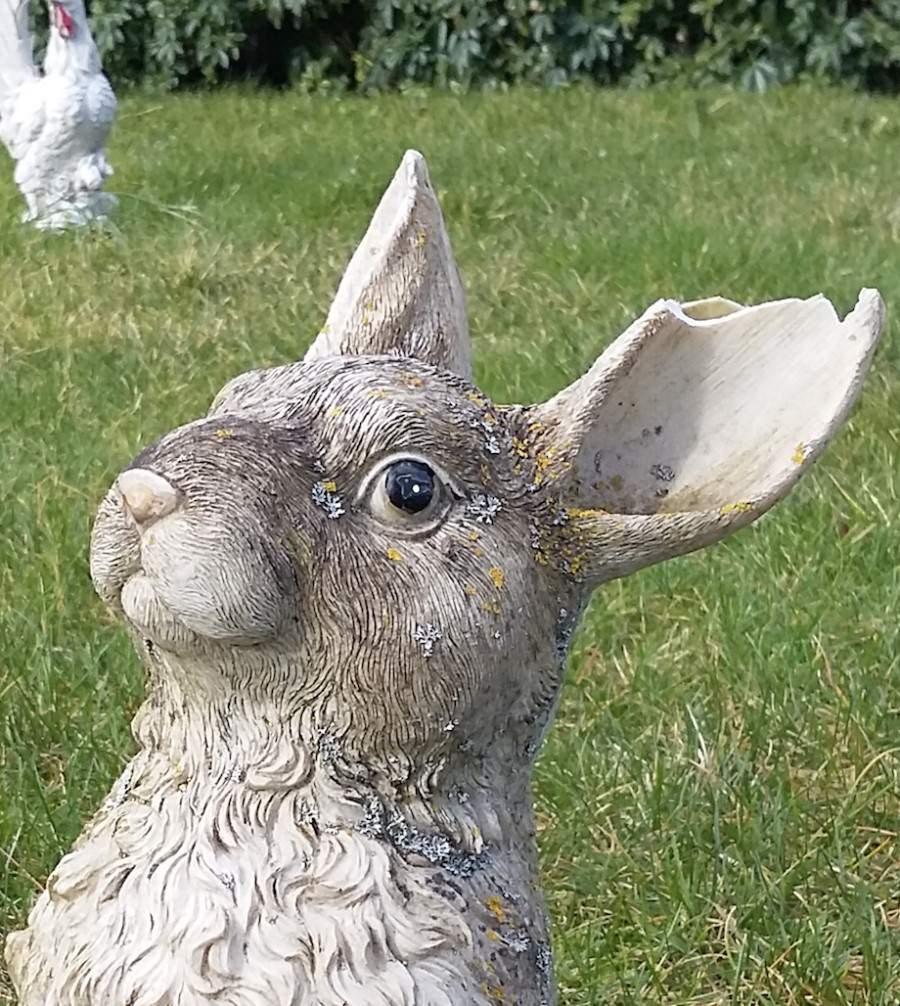Selfie-Bunny