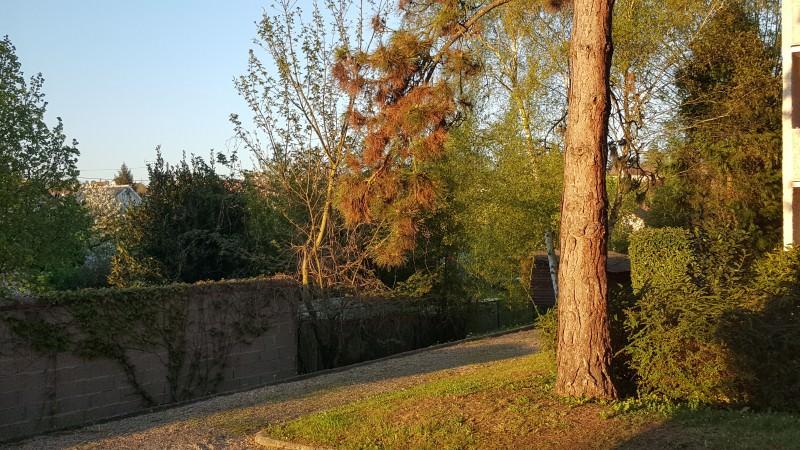 S6Edge-Tree