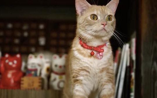 Cat Street View.24.43