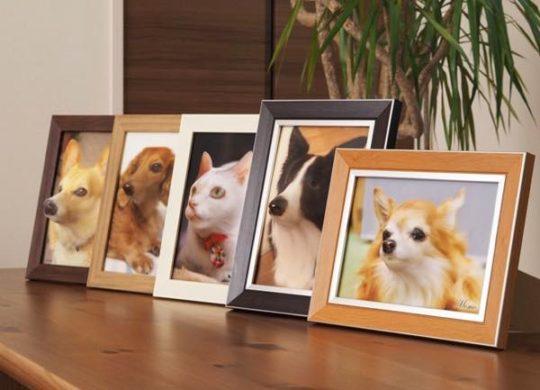 poppet-relief-pet-dog-cat-3d-photo-2-1