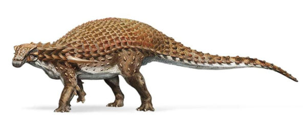 Nodosaure 600x250