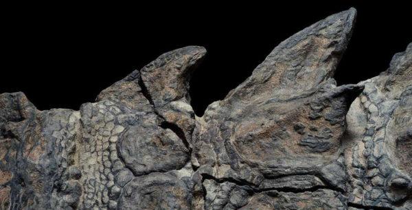 Nodosaure Fossile 1 600x307
