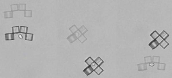 CELLULES MICROBOTS 600x275