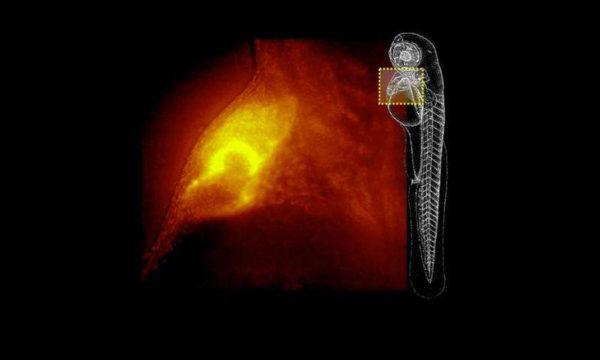 Microscope 3D 600x360