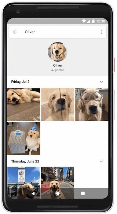 Google Photos Reconnaissance Animal Compagnie