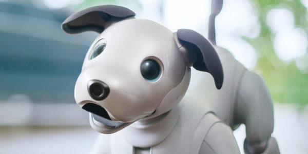 Aibo Hed 796x398 600x300