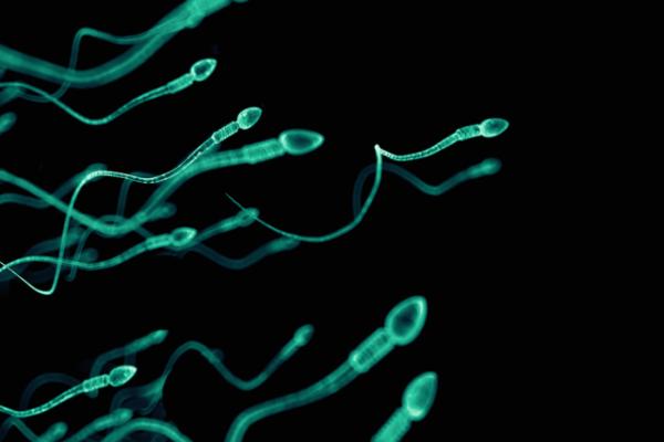 Spermatozoide 600x400