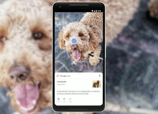 Google Lens Chien