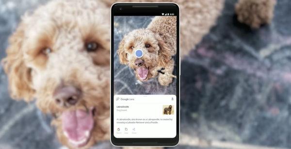 Google Lens Chien 600x307