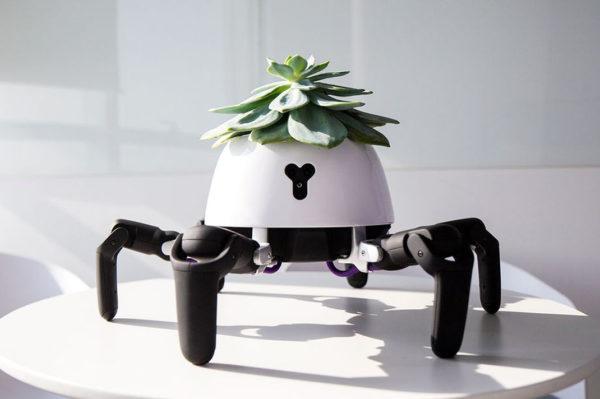 Robot Plante 600x399