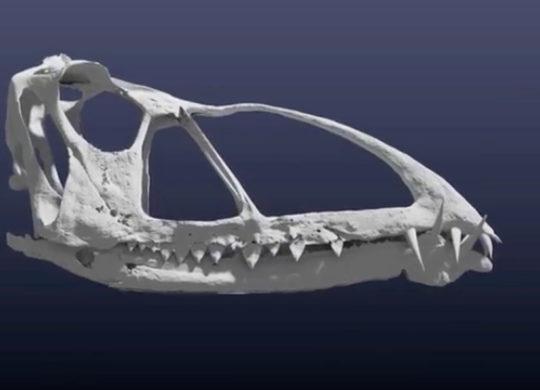 Pterosaure 3D