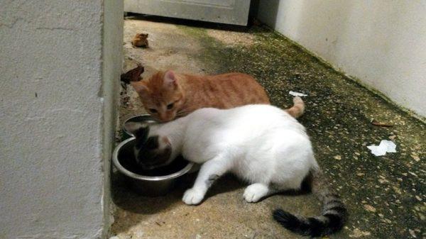 Cats 4 Flaviane Venditti 600x337