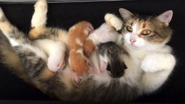 Cats 6 Twitter 625x352 600x338