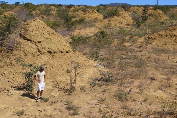 Termitieres Caatinga 600x400