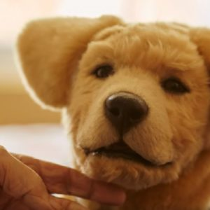 Tombot : un chien-robot conçu pour les Maisons de Retraite