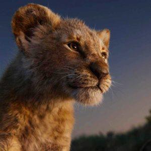 Image article Le Roi Lion : une suite du live-action annoncée, avec le réalisateur de Moonlight