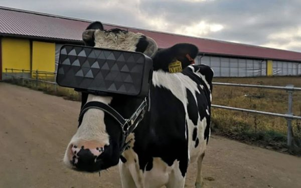 Vache Russe VR 600x375