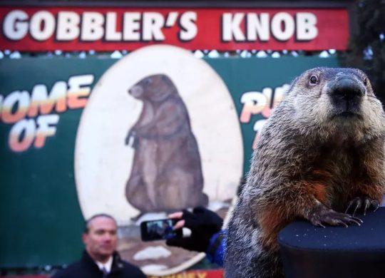 Phil la marmotte