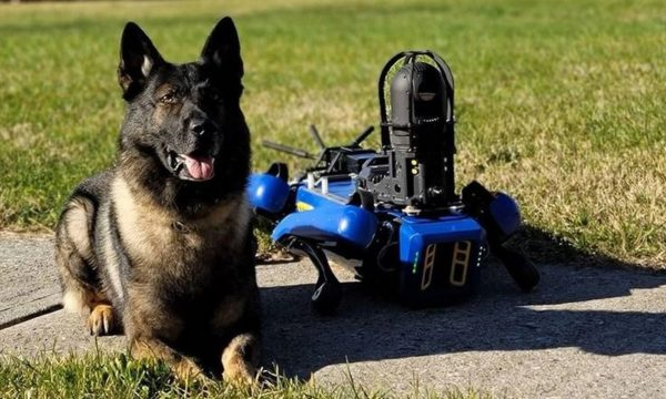 NYPD robot chien