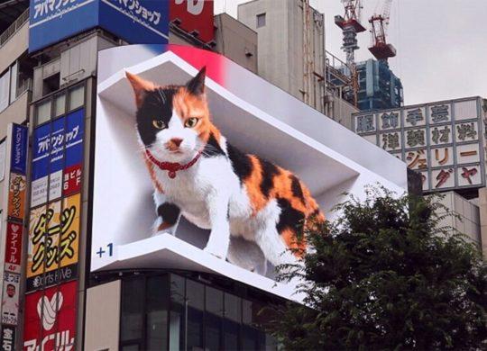 Chat géant Shinjuku