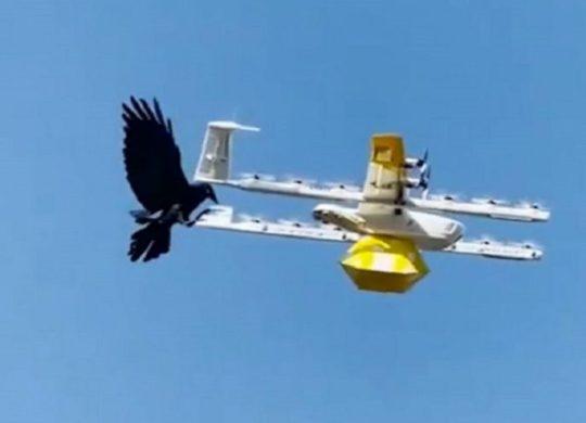 Drone corbeaux