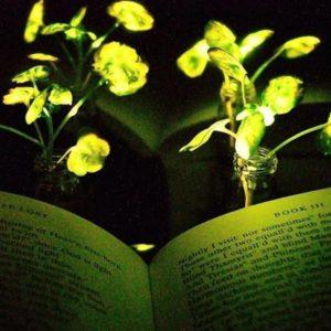 Image article Le MIT met au point des plantes lumineuses… et rechargeables !